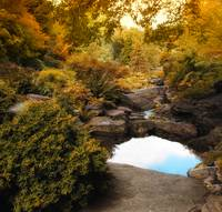 Autumn Rock Garden