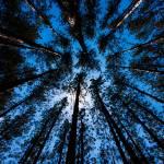 """""""Skyward Canopy"""" by Saylesnm"""