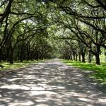 """savannah Driveway"" by gallantphotos"