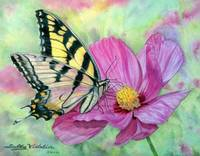 Tiger Swallowtail on Pink Cosmos by Sally Vidalin