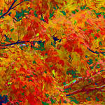 """Fall Colors Abstract"" by waynelogan"