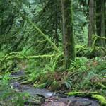 """Mossy rainforest"" by photohunter"