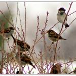 """Finches"" by DavidLeeShort"