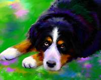 Bernese Mountain dog painting print