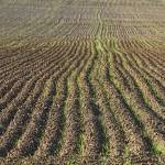 """Agriculture Landscape Farming Abstract"" by lightningman"