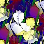 """Iris"" by bclelandart"