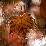 """Rainy Leaf"" by raetucker"