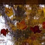 """""""Rainy Foliage"""" by raetucker"""