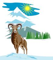 Mouflon Sheep Mountain Goat
