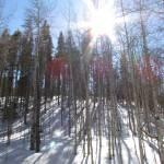 """""""Snowy Aspens"""" by theknifesmith"""