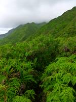 Hawaiian Fern Trail