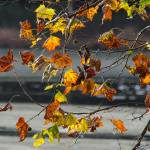"""""""Autumn Leaves"""" by WildAboutNaturePhotography"""