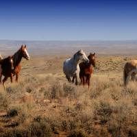 Best In The West by Jim Westin