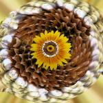 """Sunflower Mandala"" by artafire"