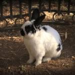 """""""RabbitAdventures"""" by DreamingIsaac"""