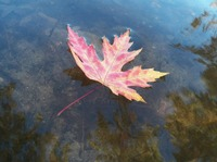 Autumn Lonely Leaf Floating