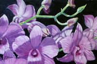 My Old Orchid