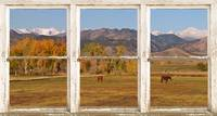 Horses and Autumn Colorado Front Range Picture Win