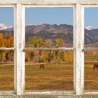 """Horses and Autumn Colorado Front Range Picture Win"" by James ""BO"" Insogna"