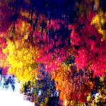 """Reflected Change of Seasons"" by waynelogan"