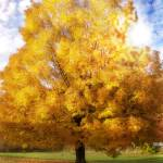 """""""The Golden Tree for Fortune and Fate"""" by LjLambert"""