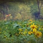 """""""Fields of Flowers"""" by LjLambert"""
