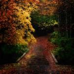 """Camino Misterioso"" by LjLambert"