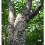 """Tatuado árbol"" by LjLambert"