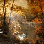 """""""Autumn Afterglow"""" by JessicaJenney"""