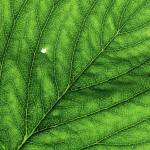 """Leaf macro"" by VAWPhotography"