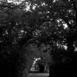 """Forest Lane"" by VAWPhotography"