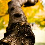 """""""Fall Tree Branch"""" by NCCreations"""
