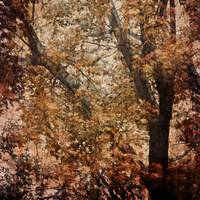 Autumn Tree Abstract