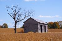 Abandoned Barn and Tree