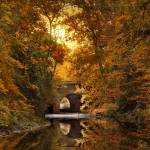 """""""Reflections on October"""" by JessicaJenney"""