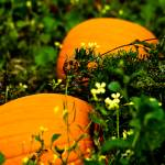"""""""Pumpkin Passage"""" by CCYPhotography"""
