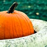 """Potted Pumpkin"" by CCYPhotography"