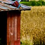 """""""Rural Life"""" by CCYPhotography"""