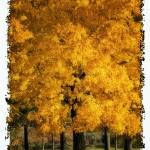 """""""LEAVES OF GOLD 2"""" by shaynaphotography"""