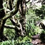 """Bush Walk"" by DougS"