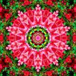 """rosepattern5"" by lipservise"