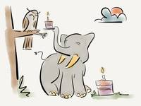 Elephants remember birthday