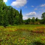 """Wetland."" by GregoryPleau"