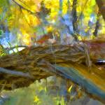 """Pealing Bark"" by graphixcat"