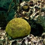 """""""sea sponge"""" by cloudsinmycoffee"""