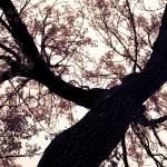 """""""tree"""" by cloudsinmycoffee"""