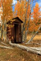 Outhouse In The Aspens
