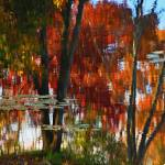 """Hayes Pond Fall Reflection"" by bavosiphotoart"