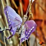 """Butterfly"" by abram"