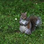"""I am here for nuts"" by photohunter"